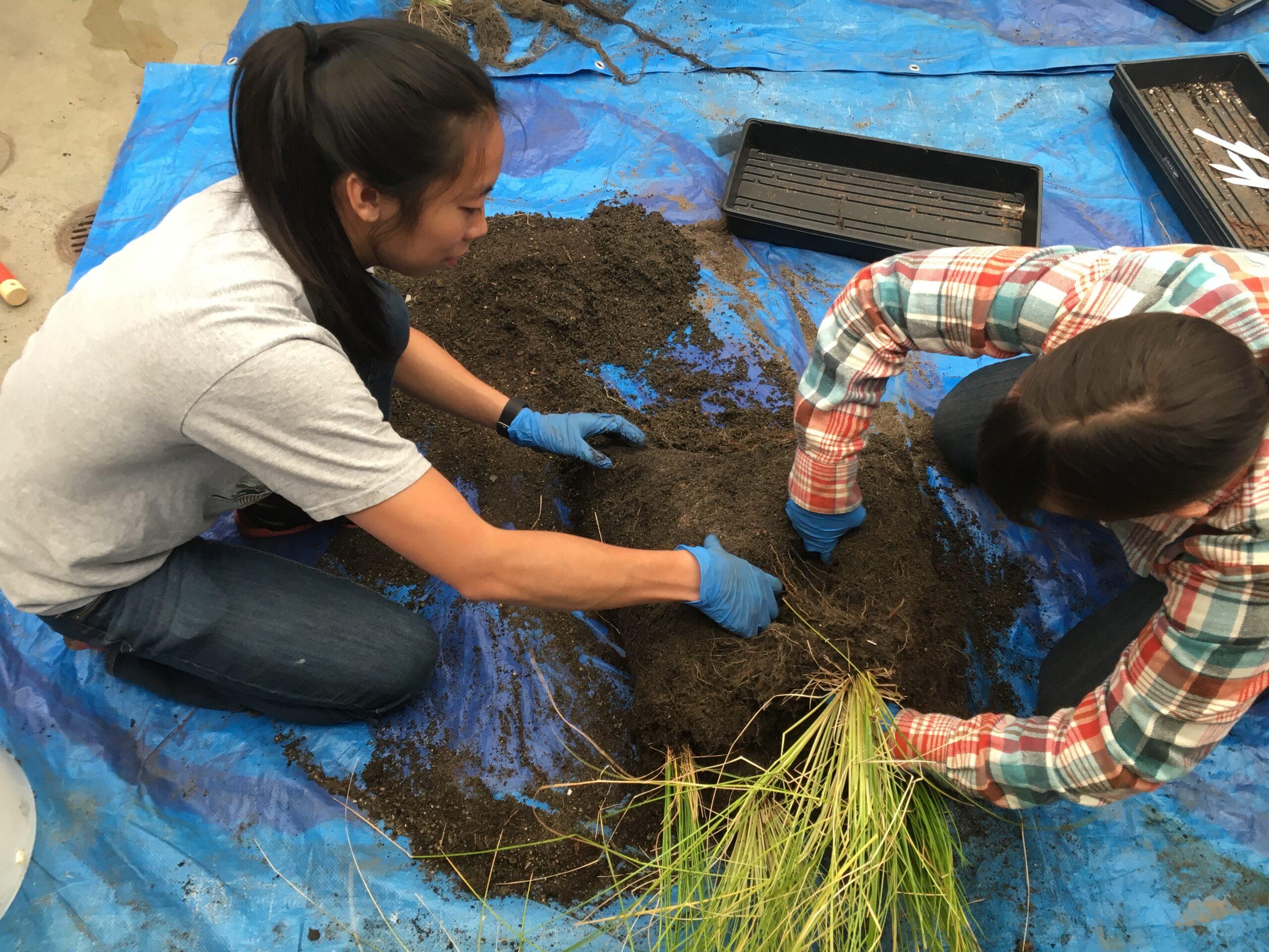 Herrera staff assess biomass of plants grown in the new HPBSM.